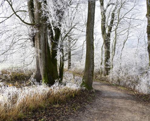 Start van de winter
